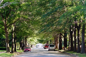 Photo of tree lined street